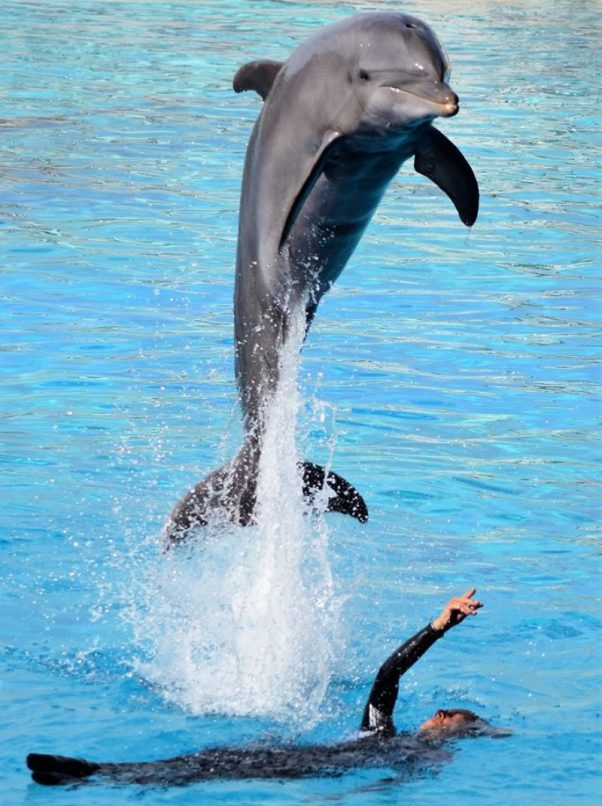 Delfino Oltremare